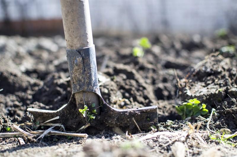 Jak przygotować ogród do wiosny?